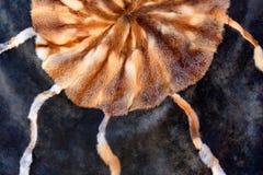 Τάπητας φιαγμένος από ζωικό δέρμα γουνών που ράβεται σε έναν κύκλο, υπόβαθρο στοκ φωτογραφία με δικαίωμα ελεύθερης χρήσης