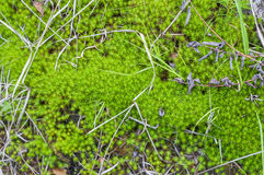 τάπητας mossy στοκ εικόνα