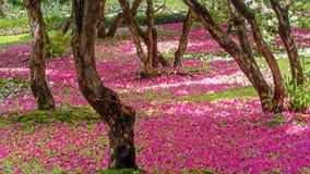 Τάπητας Rhododendron του arboreum στοκ φωτογραφίες με δικαίωμα ελεύθερης χρήσης