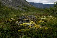 τάρανδος βρύου Στοκ φωτογραφίες με δικαίωμα ελεύθερης χρήσης