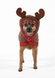 τάρανδος σκυλιών Στοκ φωτογραφία με δικαίωμα ελεύθερης χρήσης