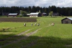 Τάρανδοι στην πορεία Στοκ Εικόνες