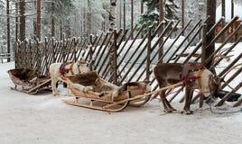 Τάρανδοι στο λουρί Στοκ φωτογραφίες με δικαίωμα ελεύθερης χρήσης