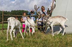 Τάρανδος στο ρωσικό ζωολογικό κήπο Στοκ Εικόνες