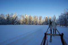 Τάρανδος στο Lapland Στοκ Εικόνα