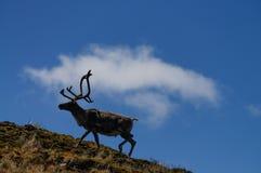 τάρανδος Στοκ εικόνα με δικαίωμα ελεύθερης χρήσης
