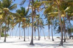 Τέλεια άσπρη αμμώδης παραλία με τους φοίνικες, Paje, Zanzibar, Τανζανία στοκ φωτογραφία με δικαίωμα ελεύθερης χρήσης