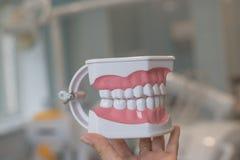 Τέλεια ευθέα δόντια Το πρότυπο σαγονιών, κλείνει επάνω Στηρίγματα στα δόντια πρότυπες οδοντοστοιχίες δοντιών, διορισμός στοματολο στοκ εικόνα με δικαίωμα ελεύθερης χρήσης
