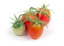 τέλειες κόκκινες ντομάτ&epsi στοκ εικόνες με δικαίωμα ελεύθερης χρήσης