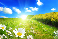 τέλειος ήλιος Στοκ Φωτογραφίες