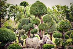 Τέμνοντα δέντρα για την κηπουρική Στοκ φωτογραφία με δικαίωμα ελεύθερης χρήσης