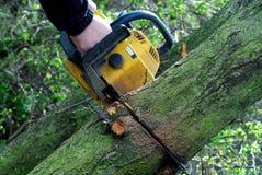 τέμνοντα δέντρα αλυσιδοπ&rh Στοκ φωτογραφίες με δικαίωμα ελεύθερης χρήσης