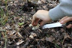 Τέμνοντα μανιτάρια αγαρικών στο δάσος Στοκ Φωτογραφίες