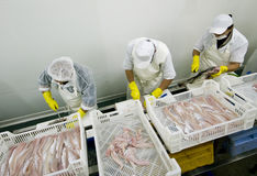 τέμνοντα ψάρια εργοστασίω& Στοκ εικόνα με δικαίωμα ελεύθερης χρήσης