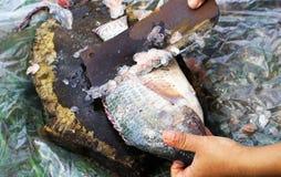 Τέμνοντα Tilapia σάρκας ψάρια για το μαγείρεμα στοκ φωτογραφία με δικαίωμα ελεύθερης χρήσης