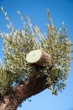 τέμνον δέντρο Στοκ Εικόνες