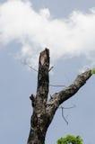 τέμνον δέντρο Στοκ Φωτογραφίες
