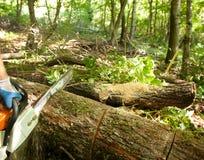 τέμνον δάσος αλυσιδοπριό Στοκ εικόνα με δικαίωμα ελεύθερης χρήσης