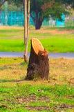 τέμνον δέντρο Στοκ Εικόνα