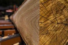 Τέμνον κούτσουρο πριονιστηρίων Στοκ Φωτογραφίες