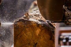 Τέμνον κούτσουρο πριονιστηρίων Στοκ Εικόνα