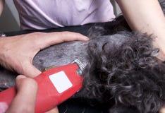 τέμνον τρίχωμα σκυλιών Στοκ φωτογραφίες με δικαίωμα ελεύθερης χρήσης
