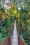 Τέντωμα γεφυρών αναστολής σε μια πυκνή πράσινη ζούγκλα επάνω από το γ Στοκ φωτογραφία με δικαίωμα ελεύθερης χρήσης