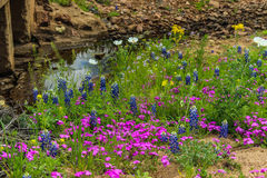 Τέξας Wildflowers από τον κολπίσκο Στοκ Φωτογραφία