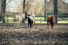 Τέσσερα άλογα Στοκ Φωτογραφίες