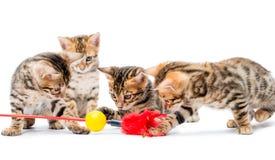 Τέσσερα γατάκια που παίζουν με το δόλωμα Στοκ φωτογραφία με δικαίωμα ελεύθερης χρήσης