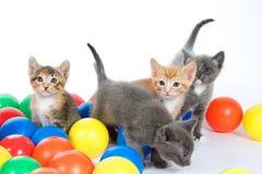 Τέσσερα γατάκια που παίζουν στις ζωηρόχρωμες σφαίρες σε ένα μακριά άσπρο backgroun Στοκ Εικόνες