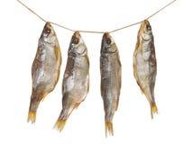 Τέσσερα εύγευστα αποξηραμένα ψάρια Στοκ Εικόνες