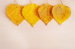 Τέσσερα κίτρινα φύλλα φθινοπώρου cottonwood Στοκ Εικόνες