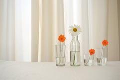 Τέσσερα λουλούδια στα γυαλιά Στοκ εικόνες με δικαίωμα ελεύθερης χρήσης