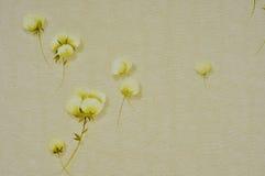 Τέσσερα πολλοί ανθίζουν τις χρυσές εικόνες με το άσπρο υπόβαθρο τέσσερα, Στοκ Εικόνα