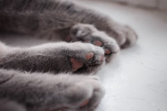 Τέσσερα πόδια μιας γάτας που κοιμάται ειρηνικά Στοκ Φωτογραφίες