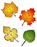 τέσσερα φύλλα Στοκ Εικόνες