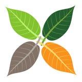 Τέσσερα φύλλα, έννοια εποχών διανυσματική απεικόνιση