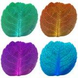 Τέσσερα φύλλα με τις φλέβες στα φθορισμού χρώματα Στοκ φωτογραφία με δικαίωμα ελεύθερης χρήσης