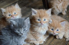 Τέσσερα χαριτωμένα μικρά γατάκια Στοκ εικόνα με δικαίωμα ελεύθερης χρήσης