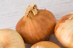 Τέσσερα χρυσά σκωτσέζικα αυξημένα κρεμμύδια ένα από πέντε σας ημερησίως στην υγιή κατανάλωση στοκ φωτογραφίες με δικαίωμα ελεύθερης χρήσης