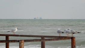 Τέσσερα seagulls που στέκονται ενάντια στη θάλασσα απόθεμα βίντεο