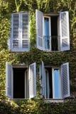 τέσσερα Windows Χτίζοντας την πρόσοψη που καλύπτεται εξ ολοκλήρου με τον κισσό Στοκ Φωτογραφία