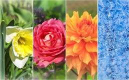 Τέσσερις εποχές: Άνοιξη, καλοκαίρι, φθινόπωρο και χειμώνας Στοκ φωτογραφία με δικαίωμα ελεύθερης χρήσης