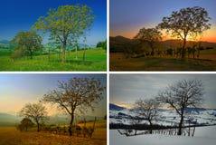 τέσσερις εποχές στοκ εικόνα