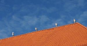 Τέσσερις ερωδιοί Στοκ φωτογραφίες με δικαίωμα ελεύθερης χρήσης