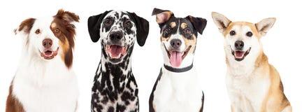 Τέσσερις ευτυχείς κινηματογραφήσεις σε πρώτο πλάνο σκυλιών Στοκ Φωτογραφίες