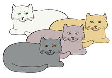 Τέσσερις διαφορετικές χρωματισμένες βρετανικές γάτες Στοκ Εικόνες
