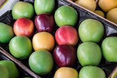 Τέσσερις διαφορετικοί τύποι ώριμων μήλων σε ένα παράθυρο στοκ εικόνες