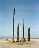 Τέσσερις νεκροί φοίνικες στοκ εικόνα με δικαίωμα ελεύθερης χρήσης